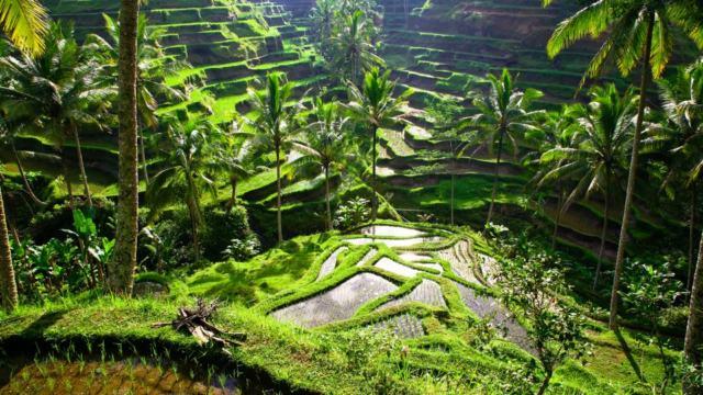 Ubud, capitale culturelle de Bali