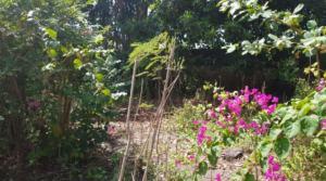 53 000 Euros – Terrain 5 ares à Seminyak/Mertanadi